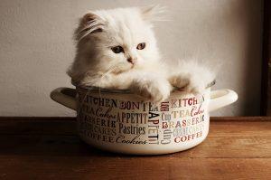 Gdzie jedzą psy i koty